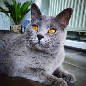 Flechette 1 - Galerie photos de chats par Ô p'tits félins Annecy