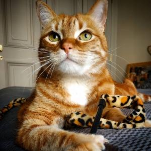 Garfield 4 - Galerie photos de chats par Ô p'tits félins Annecy