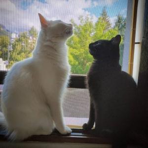 Gary_Ozzy - Galerie photos de chats par Ô p'tits félins Annecy