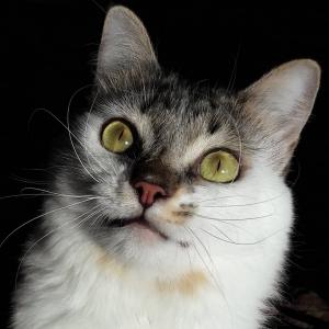 Granita 2 - Galerie photos de chats par Ô p'tits félins Annecy