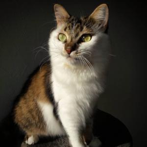 Granita 3 - Galerie photos de chats par Ô p'tits félins Annecy
