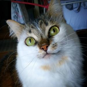 Granita 4 - Galerie photos de chats par Ô p'tits félins Annecy