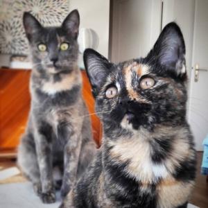 Kate_Chili - Galerie photos de chats par Ô p'tits félins Annecy