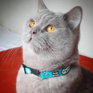 Melchior 1 - Galerie photos de chats par Ô p'tits félins Annecy