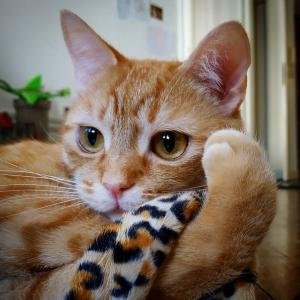 Mignon - Galerie photos de chats par Ô p'tits félins Annecy