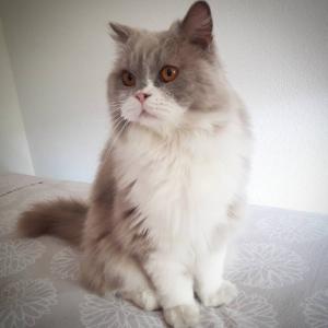 Milano 1 - Galerie photos de chats par Ô p'tits félins Annecy