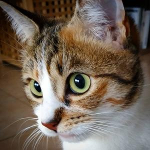 Paddle - Galerie photos de chats par Ô p'tits félins Annecy