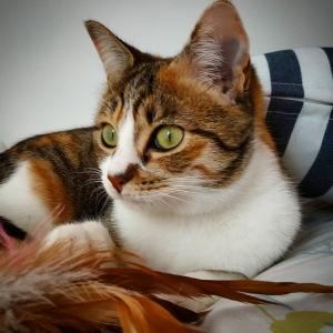 Paddle 1 - Galerie photos de chats par Ô p'tits félins Annecy