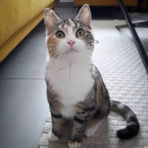 Paupiette - Galerie photos de chats par Ô p'tits félins Annecy