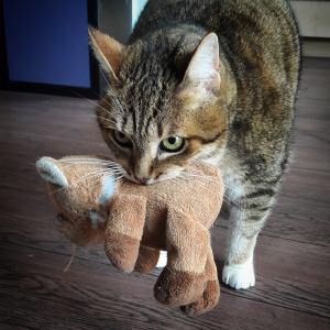 Pepito 4 - Galerie photos de chats par Ô p'tits félins Annecy