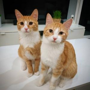 Pilou_Pyram - Galerie photos de chats par Ô p'tits félins Annecy