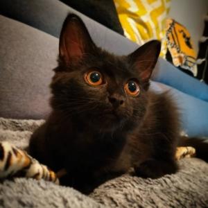 Poppy - Galerie photos de chats par Ô p'tits félins Annecy