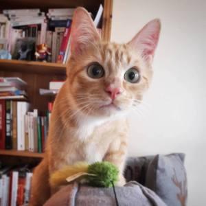 Ptit_biscuit 1 - Galerie photos de chats par Ô p'tits félins Annecy