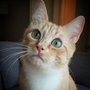 Ptit_biscuit 2 - Galerie photos de chats par Ô p'tits félins Annecy