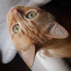 Ptit_biscuit 3 - Galerie photos de chats par Ô p'tits félins Annecy
