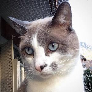 Scooby 2 - Galerie photos de chats par Ô p'tits félins Annecy