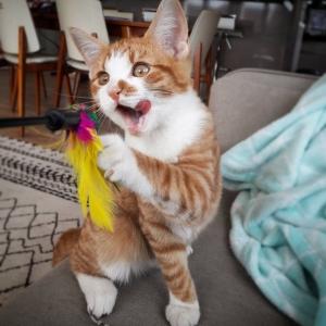 Soleil - Galerie photos de chats par Ô p'tits félins Annecy