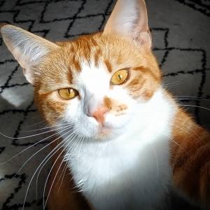Soleil 1 - Galerie photos de chats par Ô p'tits félins Annecy