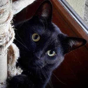 Trombone - Galerie photos de chats par Ô p'tits félins Annecy