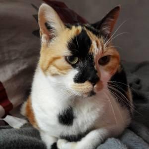 Venise 1 - Galerie photos de chats par Ô p'tits félins Annecy